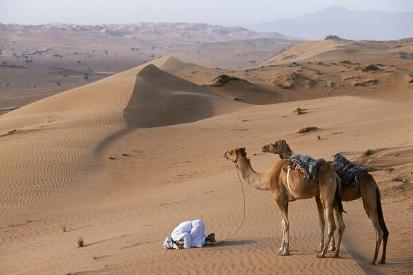 A Bedu kneels to pray in the desert, holding his camels by their halters to prevent them wandering off amongst the dunes