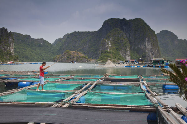 Floating fish farm off Cat Ba Island, Halong Bay, Vietnam