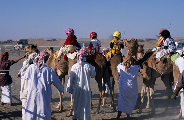 Jockeys and camels line up at the start of a race at Al Shaqiyah camel race track