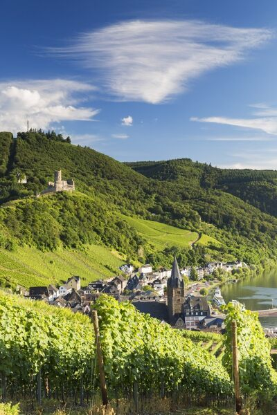 View of vineyards and River Moselle, Bernkastel-Kues, Rhineland-Palatinate, Germany