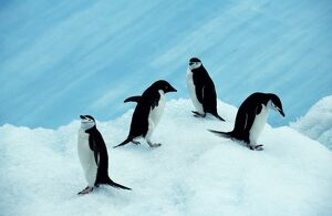 Antarctica, South Orkney Islands, Laurie Island
