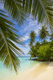 Beach on a tropical island in the South Male Atoll, Maldives