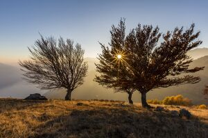 Three beech trees at sunset with Lake Como on the background. Alto Lario, Como, Lombardy
