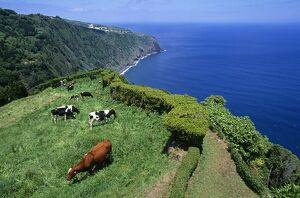 Clifftop view from Ponta da Madrugada on the island of Sao Miguel