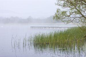 Early morning mist shrouds Llangorse Lake in the Brecon Beacons National Park, Powys