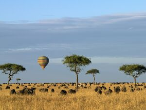 A hot air balloon floating over herds of wildebeest