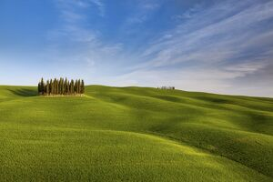 Iconic cypresses in Torrenieri country, Orcia valley, Tuscany, Italy