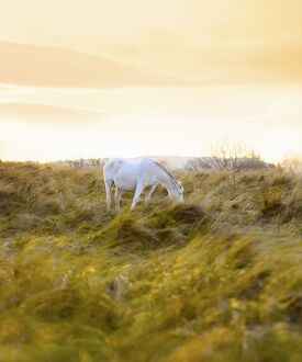 Ireland, Co.Donegal, Fanad, Horse in field