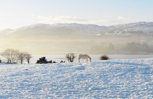 Ireland, Co.Donegal, Milford, snow covered landscape