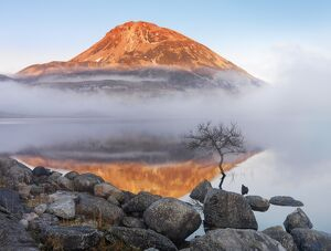Ireland, Co.Donegal, Mount Errigal reflected in Lough Dunlewey