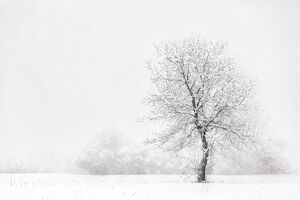 Italy, Friuli Venezia Giulia, Dolomites, lone tree in the snow