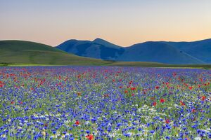 Italy, Umbria, Sunset in Castelluccio di Norcia during flowering
