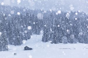 Italy, Veneto, Dolomites, Winter in Sappada