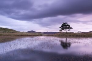 Kelly Hall Tarn at twilight, Lake District, Cumbria, England. Autumn (November)