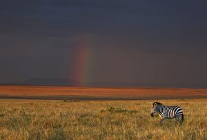 The late afternoon sun breaks through rain clouds in the Masai Mara National Reserve