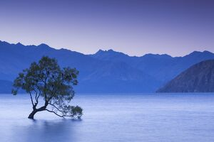 New Zealand, South Island, Otago, Wanaka, Lake Wanaka, solitary tree, dusk