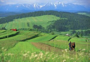 The Pienny, Carpathian Mountains, Poland