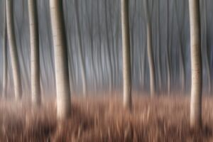 Plain Piedmont, Piedmont, Italy. Autumn abstract poplars