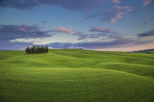 San Quirico d'Orcia, Tuscany, Italy. Cypresses at sunset