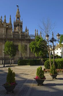 Seville's Cathedral with its famous bell-tower