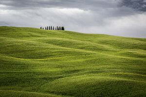 Tuscany, Val d'Orcia, Italy. Cypress trees in green meadow field with clouds gathering