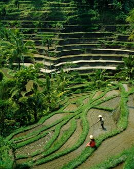 Ubud / Rice Terraces