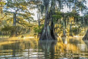 USA, Louisiana, Lake Fausse Pointe State Park is located in Iberia Parish, Louisiana