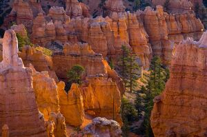 USA, Utah, Bryce Canyon National Park, near Sunset Point