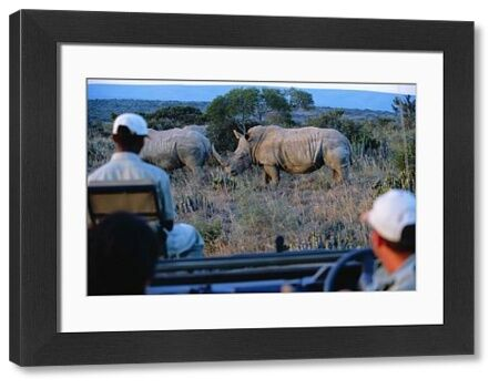 Watching White rhino from the safety of a game-viewing vehicle on a game drive at Kwandwe private game reserve