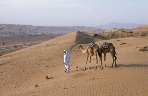 A Bedu leads his camels through the sand dunes in the desert