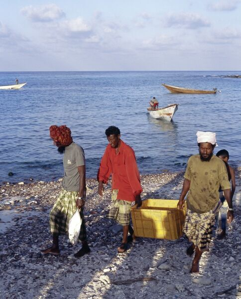 Fishermen bring in their catch at Sekra, a fishing village on Socotra's north coast. The island's coastal population depends almost entirely on fishing as its principal source of livelihood with shark, kingfish and tuna being the most