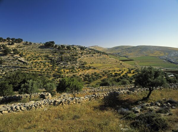 Shepherds' Fields, Bethlehem, Israel