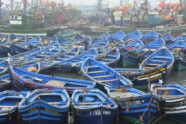 Traditional fishing boats in the busy fishing harbour of Essaouira, the third in importance in Morocco