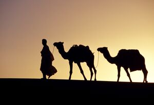A Berber tribesman is silhouetted as he leads his two