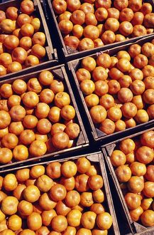 Boxes of Satsumas