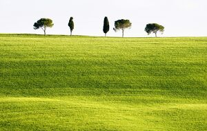 tuscany/classic tuscan landscape near san quirico valle
