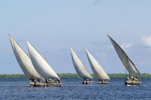 Dhows sailing off Lamu Island
