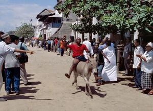 A donkey race is held on Lamu Island as part of the