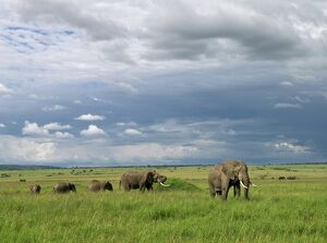 Elephants in Masai Mara Game Reserve