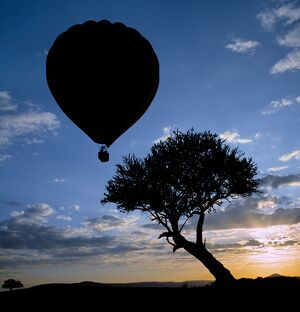 A hot air balloon takes off in Masai Mara Game Reserve