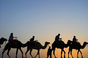 North Africa, Morocco, Tinfou Dunes, camels at sunset