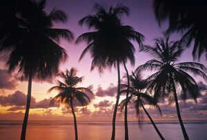 Pigeon Point, Tobago, Trinidad & Tobago