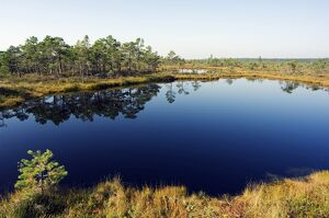 Protected Land of Bogs and Marshes in the Kemeri National Park near Jurmala