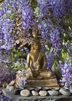 A Small Buddha Shrine Surrounded By Wisteria In The Hotel 5746521