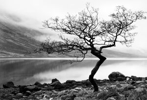 serene landscapes/solitary tree shore loch etive highlands scotland