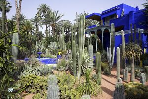 The sub-tropical Jardin Majorelle in the Ville Nouvelle of Marrakech