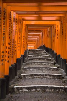 Torii gates, Fushimi Inari Taisha Shrine, Kyoto, Honshu, Japan