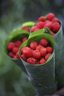 Wild raspberries held in the leaf of a Porcelaine Rose